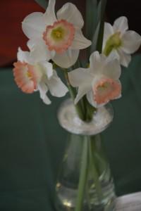 Cut Specimen Class 3 Narcissus